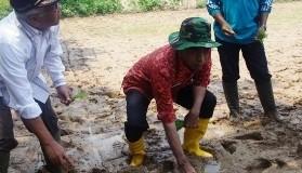 Penanaman Padi Sawah Tadah Hujan oleh Wabupo Drs.H.Asyirwan Yunus, M.Si.(f-ogi)