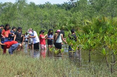 Anak-anak Mentari International School bintaro menanam mangrove di konservasi penyu Kota Pariaman.