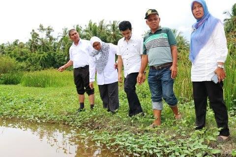 Kepala Dinas Pertanian Kota Pariaman Ir Agusriatman Tinjau Lokasi
