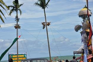 kodim 0308 pariaman dan disbudpar gelar lomba beruk panjat kelapa