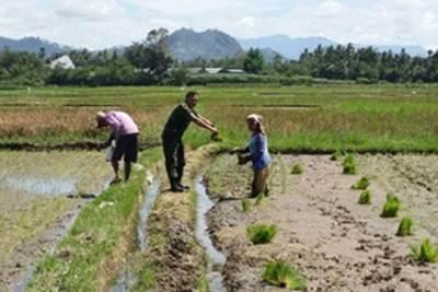 Pendampingan pada petani dilakukan oleh Babinsa Koramil 07/Tilkam.