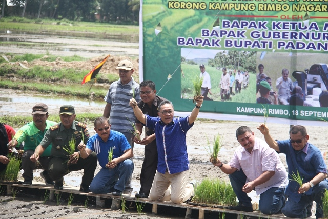 Ketua MPR RI Zulkifli Hasan didampingi Bupati Ali Mukhni menanam bibit padi di di Kampung Rimbo, Nagari Padang Bintungan, Minggu, (18/9/2016).