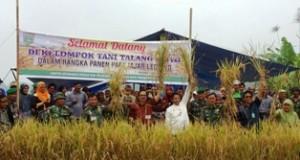 Kodim 0307/Tanah Datar Panen Raya di Nagari Kacang Kayu