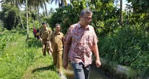 Walikota meninjau langsung ke area persawahan warga di Padang Kaduduak Payakumbuh Utara bersama Kabid Pengairan Ir Muslim MSi dan Camat Nofriwandi SH.