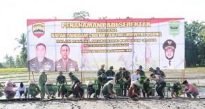 Pangdam I/BB Tanam Padi Serentak di Padangpariaman