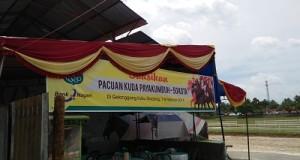 Pacuan Kuda Payakumbuh-Limapuluh Kota 7-8 Februari 2016