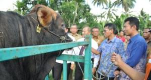 Gubernur Lanching Tri Arga Model di Kota Payakumbuh